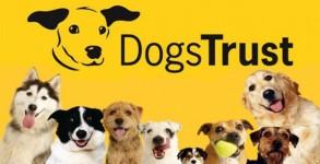 dogstrustlgo1-628x392