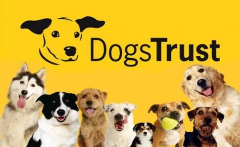 MASOVNO UBIJANJE PASA U SREBRENIKU: DOGS TRUST POZIVA NA PRONALAZAK POČINILACA I ZAKONSKO PROCESUIRANJE ISTIH